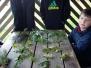 Rozpoznawanie gatunków drzew
